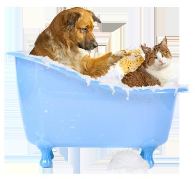 Indigo Dog Grooming